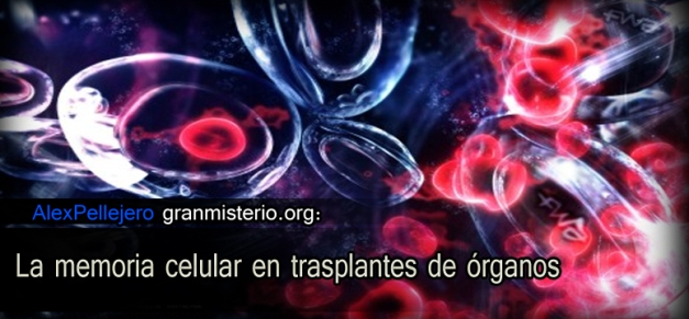 memocer - La memoria celular en trasplantes de órganos