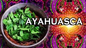 minia_ayahuasca